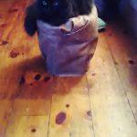 Cat Litter Bucket Small Ottoman