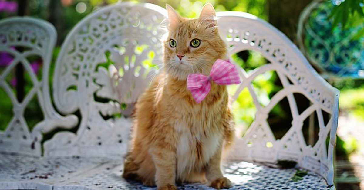 Cat Sewing Projects