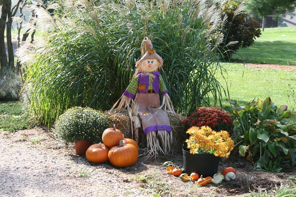 pumpkin-991825_960_720