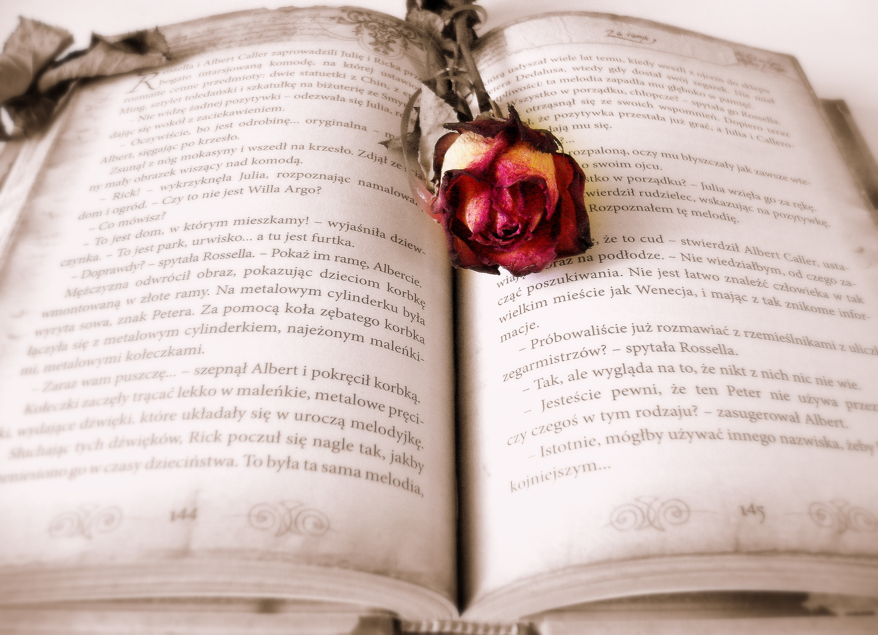 writing-book-novel-reading-rose-romantic-944135-pxhere.com